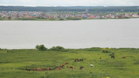 View from the hill to the village, the river and grazing horses. Herd of horses grazing near the river. Landscape countryside stock video footage