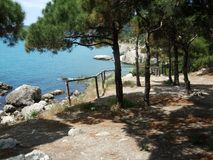 View from hill with wooden handrails and pine tree on coastline Black sea. Crimea. View from hill with wooden handrails and pine trees on coastline Black sea royalty free stock images
