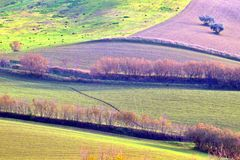 View on the hills. Particular of country fields and trees on an autumn early afternoon Royalty Free Stock Images