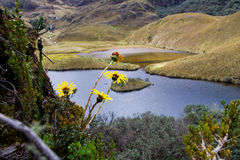 View from the hills. Lookout in cajas national park, ecuador with flowers and a lake Royalty Free Stock Image