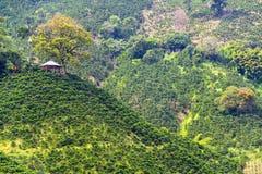 Coffee Landscape and Gazebo stock photography