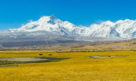 View of the Himalayan mountains Royalty Free Stock Photos