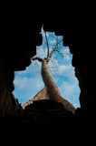 View through hole to tree. Temples of Angkor Wat Stock Photo