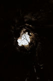 View. From hollow trunk of old lime Stock Image