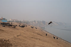 A view of Holy Ghats of Varanasi Royalty Free Stock Images