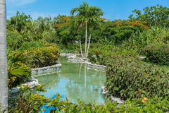 View of home tropical garden river with various pl Royalty Free Stock Images