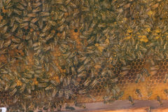 View of the honeycomb of a beehive. Intentional blur Stock Photos