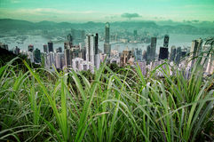 View of Hong Kong city. From grassy point on Victoria Peak Stock Image