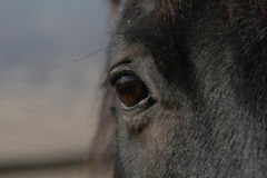 A view from a horse. A close up view of a big brown eye of a horse with a blurred background Royalty Free Stock Photography