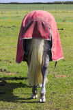 A view of a horses rear end with rump and tail as it stands in a field on a bright sunny day. Wearing a cape royalty free stock image