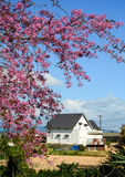 View of the house with cherry flowers in Dalat, Vietnam Stock Photo