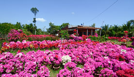 View of the house with flower garden Stock Photography