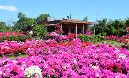 View of the house with flower garden Royalty Free Stock Photos