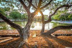 View of a huge tree with lake in Bangkok city, Thailand. Beautiful view of a huge tree with lake in Bangkok city, Thailand royalty free stock images