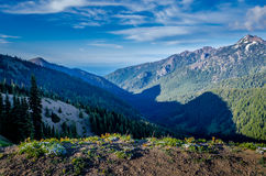 View from Hurricane Hill Trail, Olympic National Park Royalty Free Stock Photo