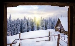 View from the hut on the snow-covered tree in mountains in sunli. Ght Stock Photos
