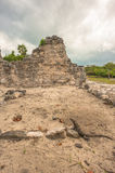 View of iguana on Mayan Ruins in El Rey royalty free stock photography