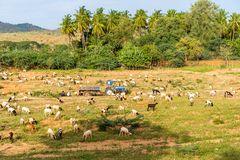 View of the indian rural landscape, Puttaparthi, Andhra Pradesh, India. Copy space for text. View of the indian rural landscape, Puttaparthi, Andhra Pradesh Royalty Free Stock Photos
