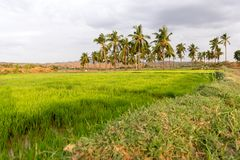 View of the Indian rural landscape, Puttaparthi, Andhra Pradesh, India. Copy space for text. View of the Indian rural landscape, Puttaparthi, Andhra Pradesh Stock Photo