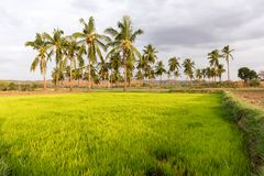 View of the Indian rural landscape, Puttaparthi, Andhra Pradesh, India. Copy space for text. View of the Indian rural landscape, Puttaparthi, Andhra Pradesh Royalty Free Stock Image