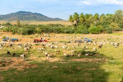 View of the Indian rural landscape, Puttaparthi, Andhra Pradesh, India. Copy space for text.