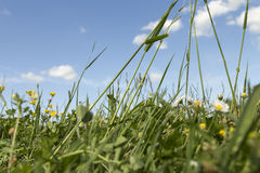 The view of an insect. A very low angle photo of an meadow with grass and flowers and the blue canvas with some clouds in the background Stock Photo