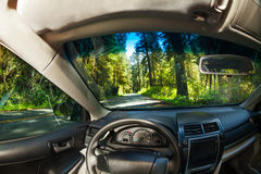 View inside the car with forest of Redwood outside Royalty Free Stock Image