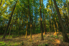 View inside of the forest on the trees Stock Photo