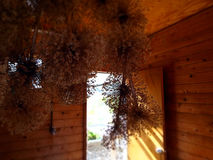 View from inside potting shed with dried hydrangeas hanging from ceiling Stock Images