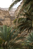 View from the interior of Wadi An Nakhur, Oman Royalty Free Stock Images