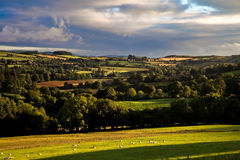 View of Irish rural scene on sunny summer day in Tipperary fields. Ireland Royalty Free Stock Photography