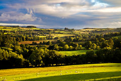 View of Irish rural scene on sunny summer day in Tipperary fields. Ireland Royalty Free Stock Image