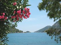 View of island in oleander frame Royalty Free Stock Photography