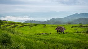 View of an isolated cottage in rice terraces at Bong Piang forest in Chiang Mai, Thailand. View of a isolated cottage in rice terraces in cloudy day at Bong Royalty Free Stock Images