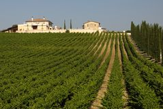 Italian vineyard on a sunny day. A view of an Italian vineyard lined by Cypress trees on a sunny day stock images