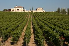 A view of an Italian vineyard on a sunny day. A view of an Italian vineyard lined by Cypress trees on a sunny day royalty free stock images