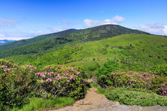 View from Jane Bald Roan Mountain NC and TN. View from Jane Bald, Roan Mountain Highlands, where the wild Catawba rhododendron bloom in summer along the border Stock Photo