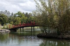 View of a Japanese garden with red bridge. Its springtime in the garden Royalty Free Stock Images