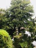 Japanese Tea garden. View at Japanese Tea Garden in San Francisco stock image