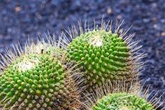 View of Jardin de Cactus,  Lanzarote, Canary Islands, Spain Royalty Free Stock Image