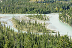 View from Jasper in Canada Alberta royalty free stock image