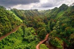 View on jungle. Of Haewaii.  Big island. USA Royalty Free Stock Photography