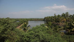 View of the jungle in India in Goa.  stock footage