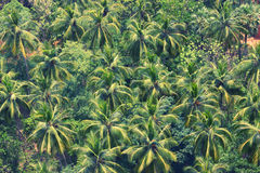 View on a jungle. With palms from above royalty free stock photos