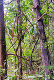 View of Jungle Plants Royalty Free Stock Photo