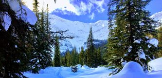 A view of kananaskis, alberta, canada with freshly powdered snow royalty free stock image