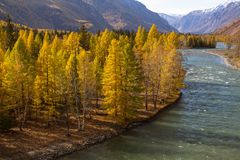 View of the Katun river at autumn, Altai Republic. Royalty Free Stock Photography