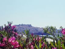 View of Kavala Fortress and Bay through native flowers royalty free stock images
