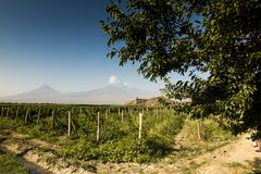 Grape field in Ararat valley. View of Khor Virap and Mount Arara. View of the Khor Virap monastery and Mount Ararat. In the foreground grape plantations Royalty Free Stock Photo
