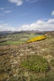 View from Knockfarrel hill near Strathpeffer in Scotland. Stock Images